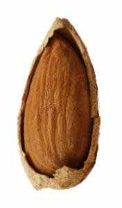 Almond in half it's shell