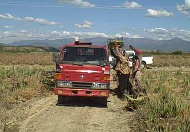 Farm Truck Carrying Produce