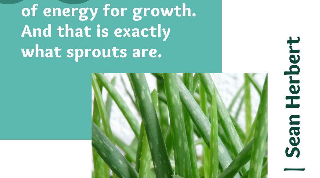 Got Sprouts Sean Herbert Quote